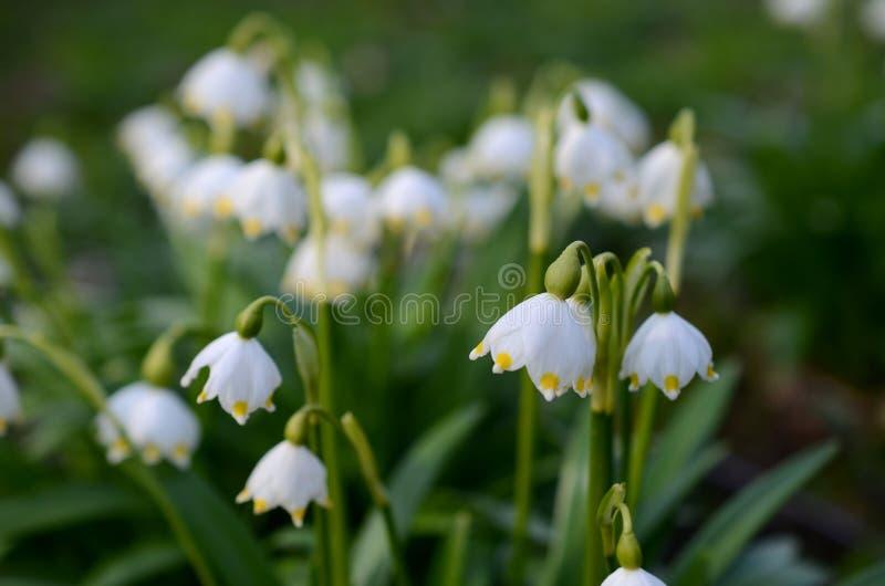 Flor do floco de neve com fundo azul fotos de stock royalty free