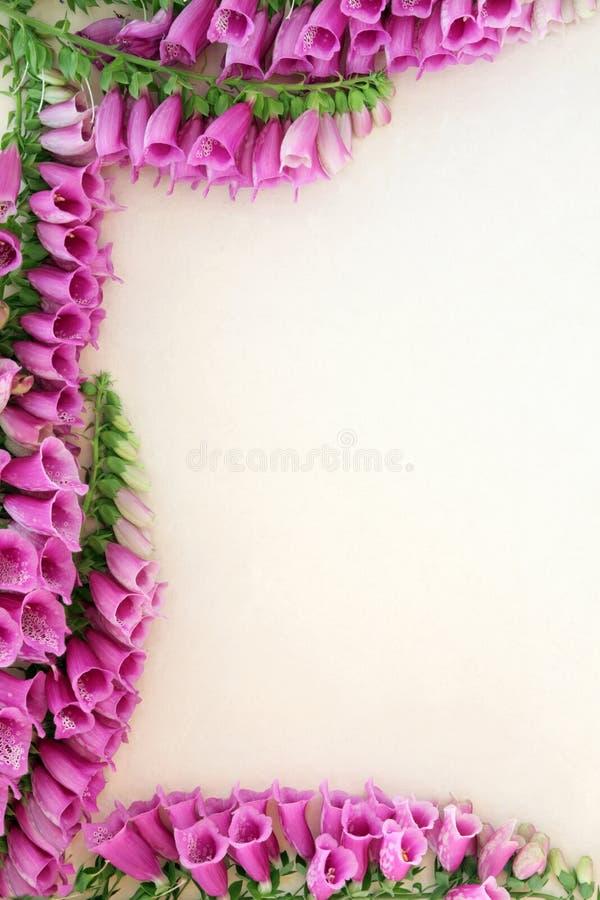 Flor do Foxglove (purpurea da digital) imagens de stock