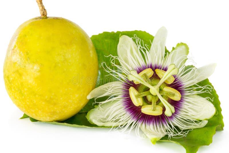 Flor do fruto de paixão com fruto de paixão maduro imagens de stock royalty free