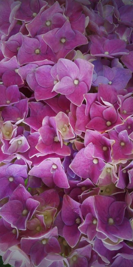 Flor do fundo para o telefone imagem de stock