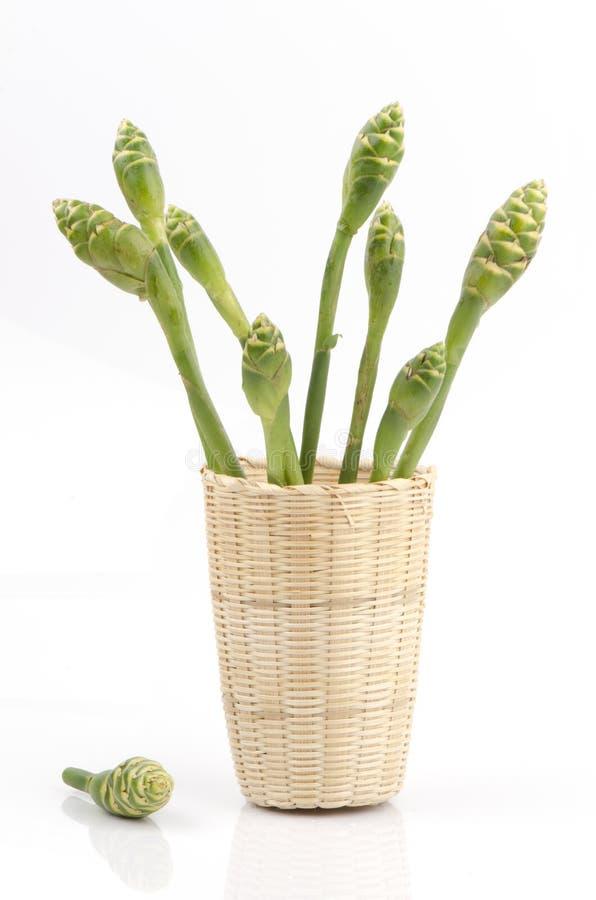 Flor do gengibre (officinale Roscoe do Zingiber). imagens de stock