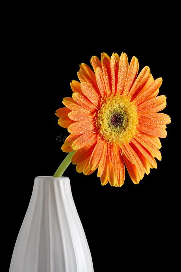 Flor do Gerbera em um vaso foto de stock