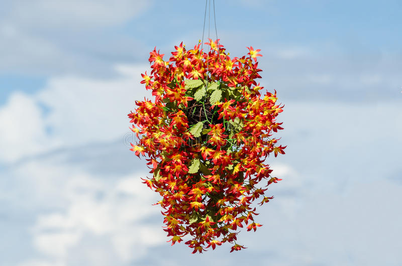 Flor do grupo foto de stock royalty free