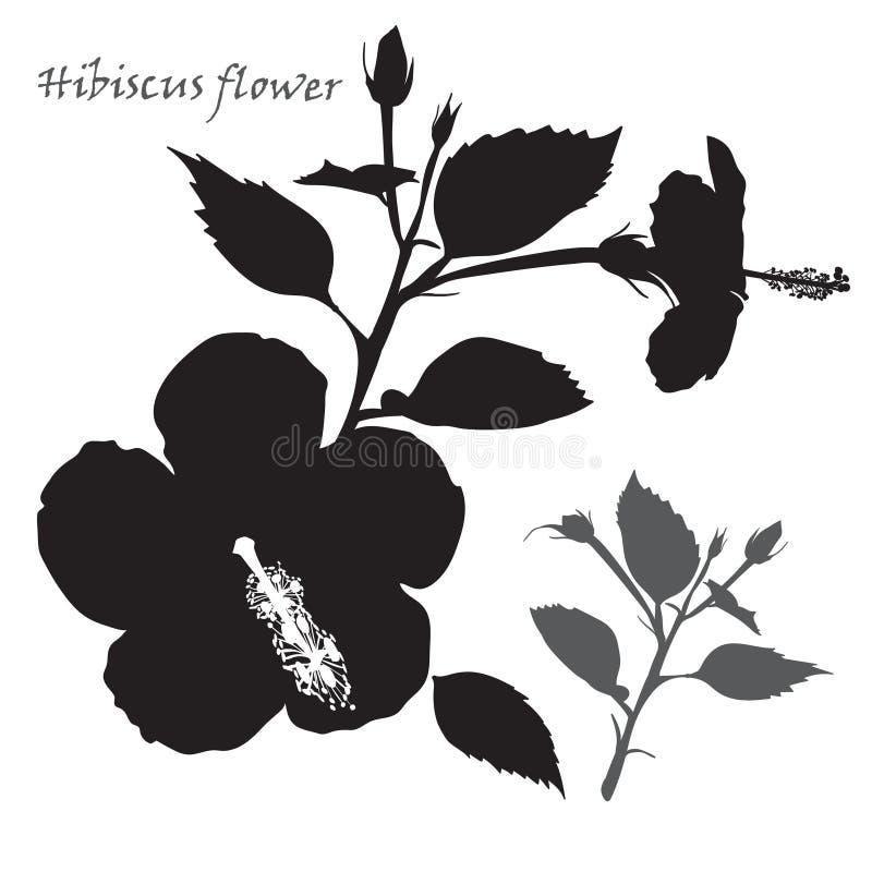 Flor do hibiscus Silhueta preta no fundo branco ilustração royalty free