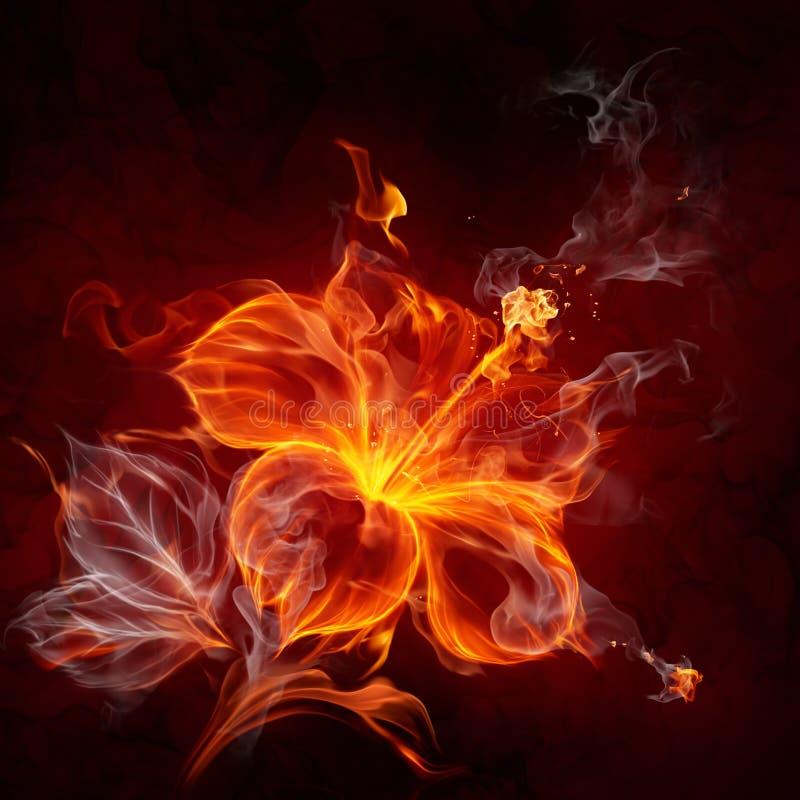 Flor do incêndio ilustração royalty free