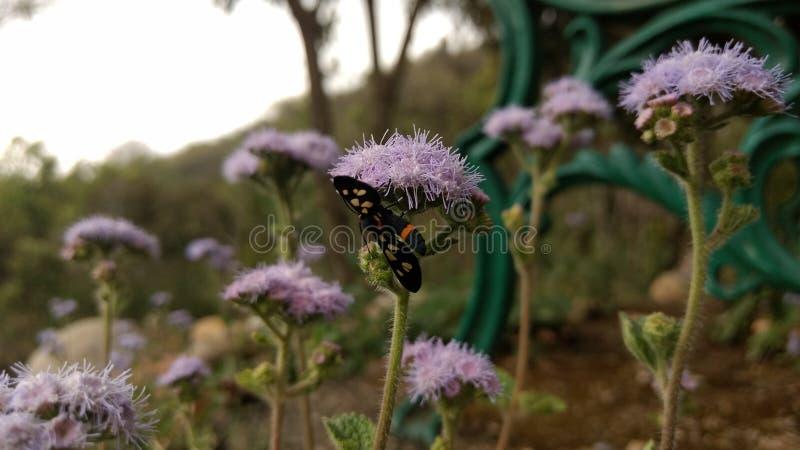 Flor do inseto fotos de stock