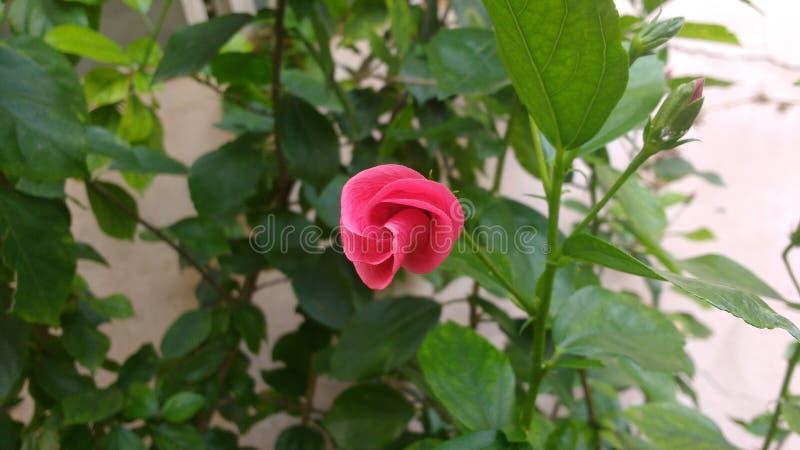 flor do inverno imagens de stock