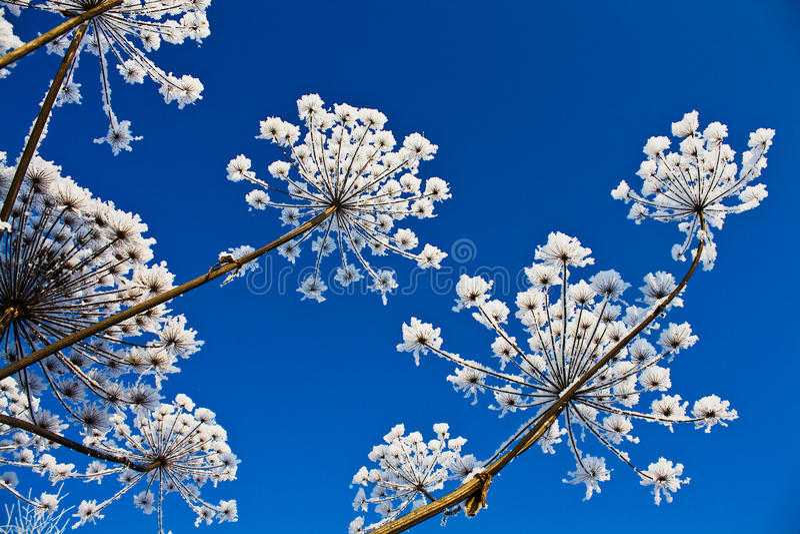 Download Flor do inverno foto de stock. Imagem de outdoors, geada - 16868510