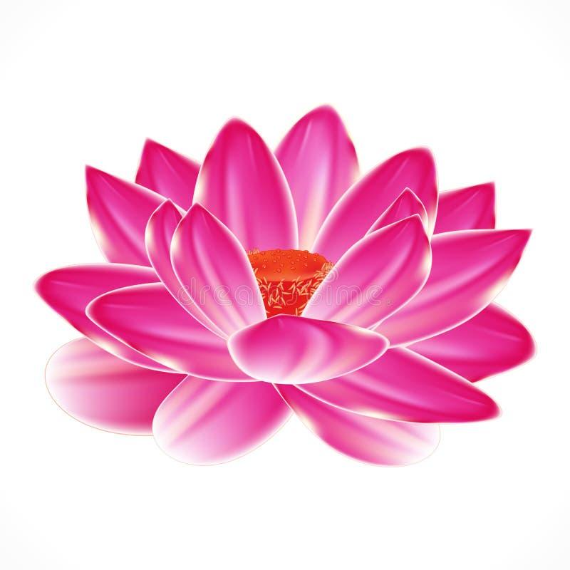 Flor do lírio de água. ilustração do vetor