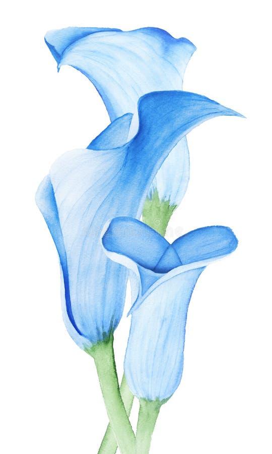 Flor do lírio de Calla Ramalhete do casamento ilustração stock