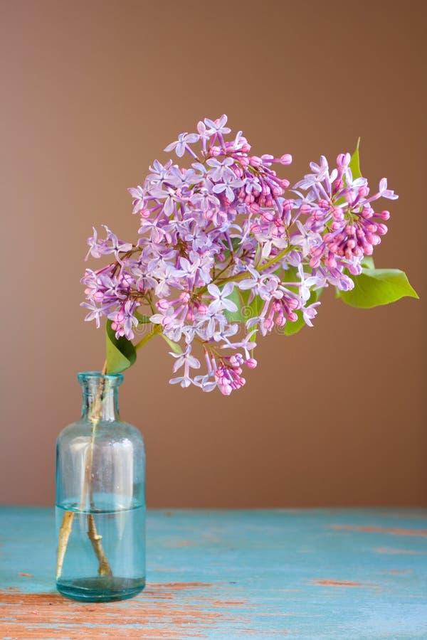 Flor do Lilac fotos de stock