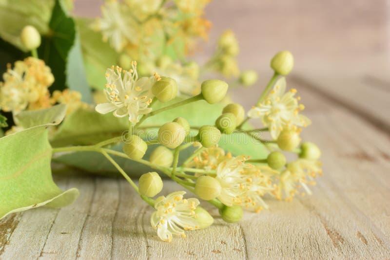 Flor do Linden na mesa de madeira imagem de stock