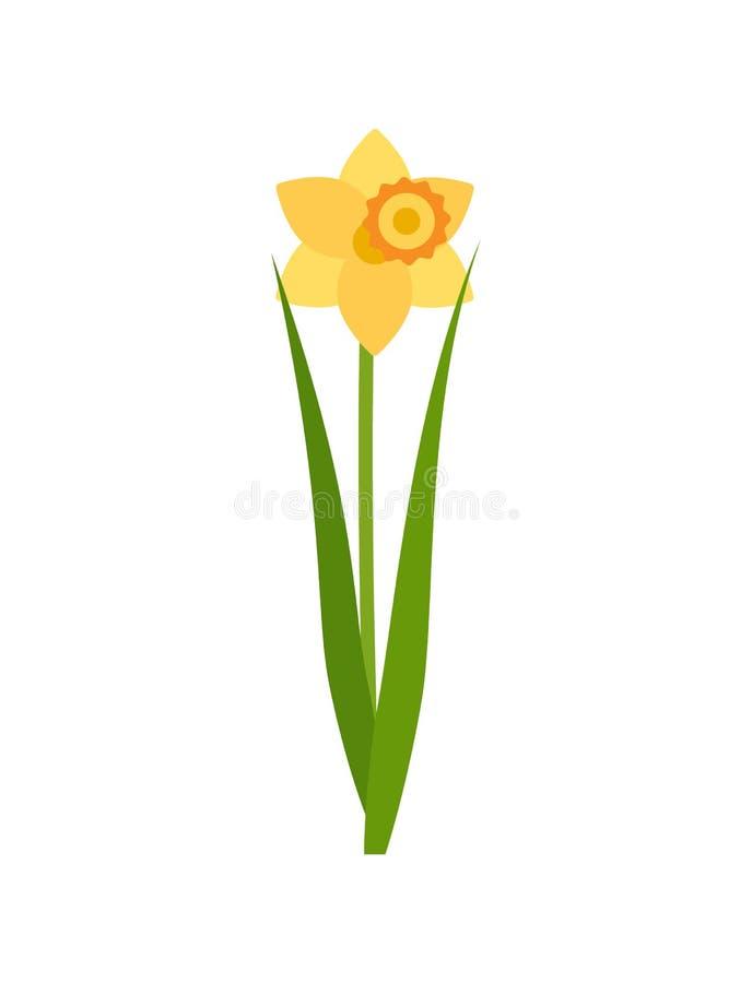 Flor do narciso amarelo com estábulo e folha verdes ilustração stock