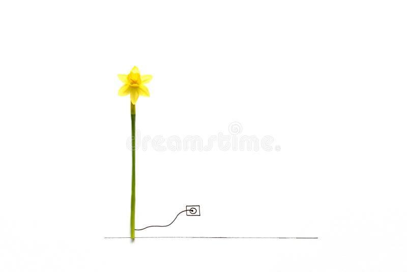 Flor do narciso associada com a turbina do gerador de vento unida à tomada elétrica tirada Energia natural ou conceito criativo d foto de stock royalty free