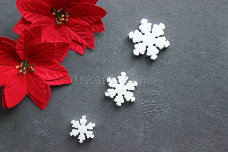 Flor do Natal com as folhas vermelhas das poinsétias em um fundo preto fotografia de stock royalty free