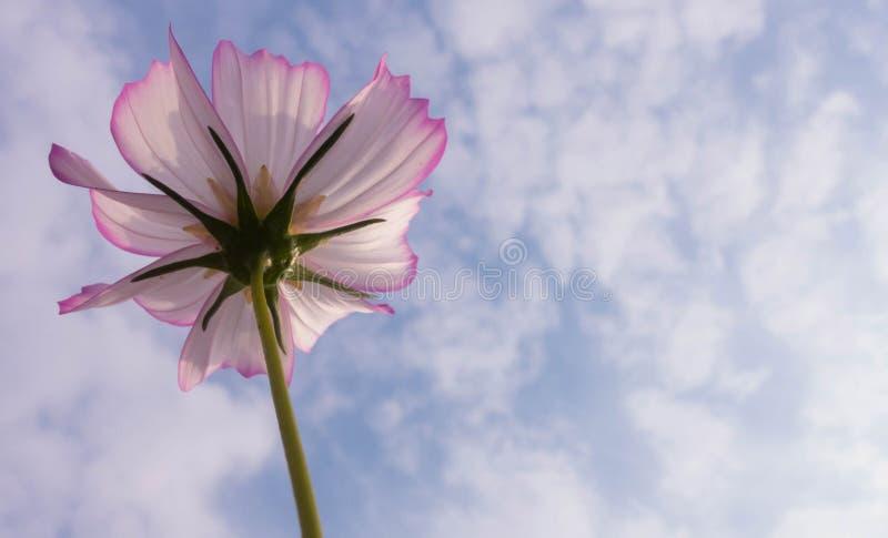 Flor do outono fotografia de stock