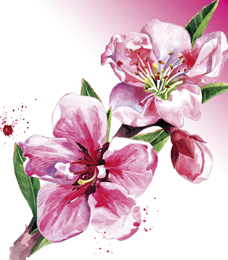 Flor do pêssego ilustração royalty free