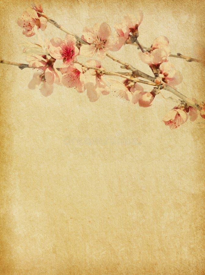 Flor do pêssego ilustração stock