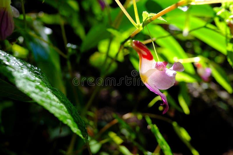 Flor do papagaio imagens de stock