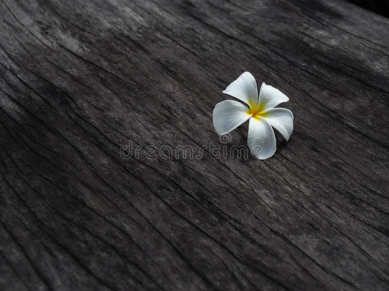 Flor do Plumeria no assoalho de madeira do tom escuro fotografia de stock royalty free