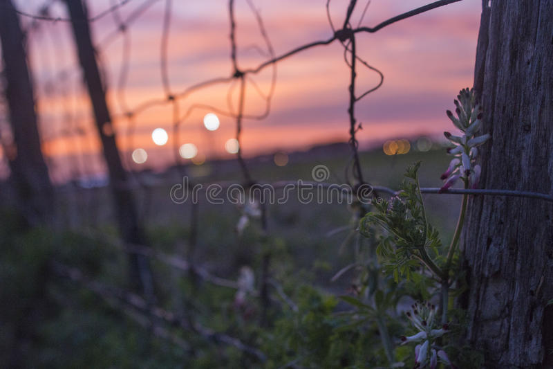Flor do por do sol fotos de stock royalty free