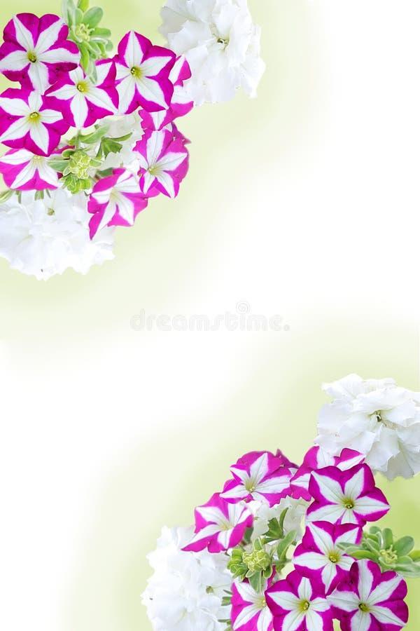 Flor do quadro das flores imagens de stock royalty free