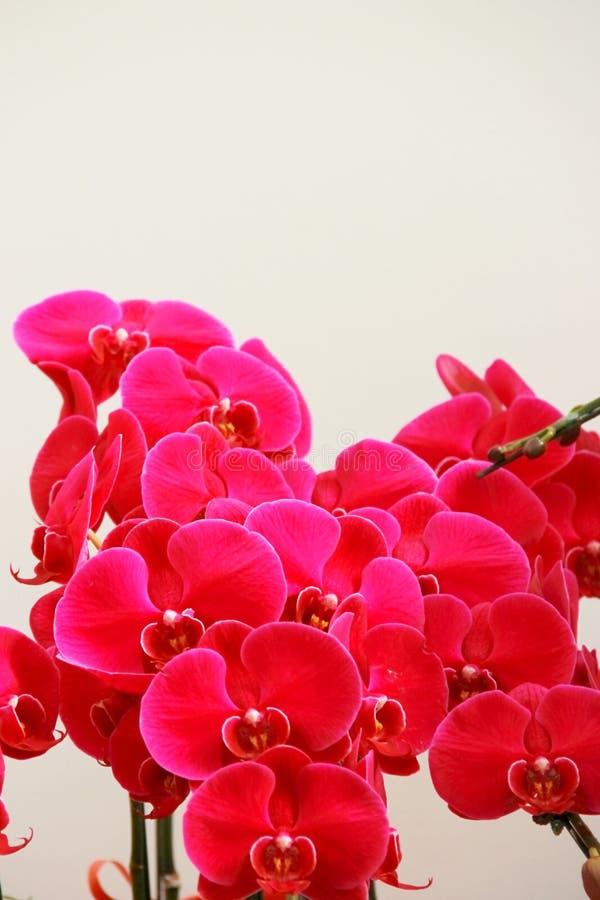 A flor do rosery está entrando a flor fotos de stock