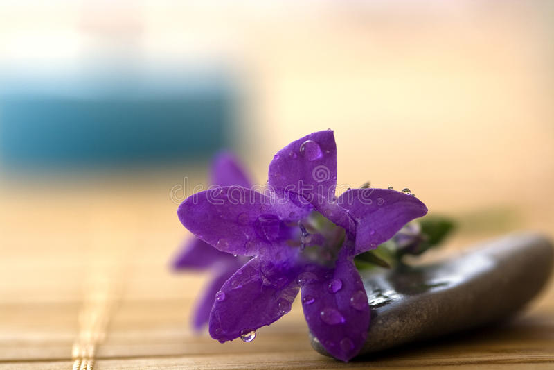 Flor do roxo dos termas fotografia de stock royalty free
