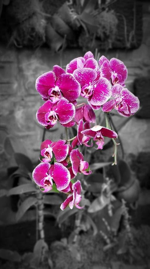 [Flor do tiro original] fotografia de stock royalty free
