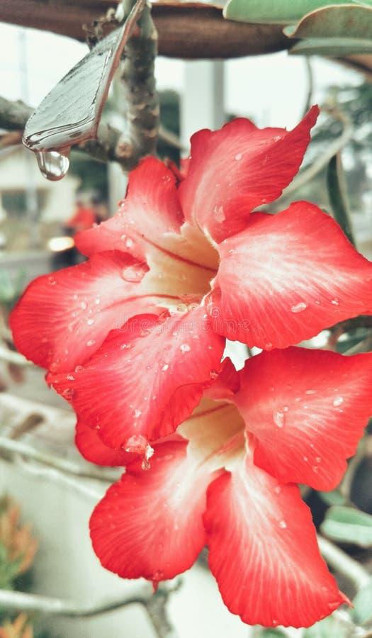 Flor do trópico da natureza foto de stock