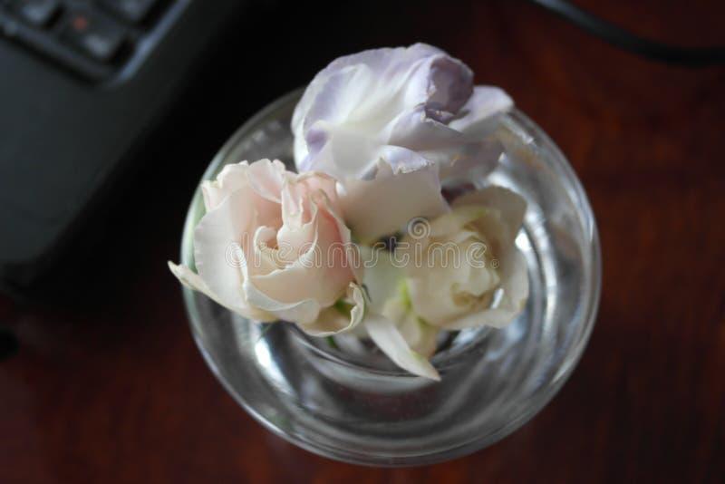 Flor do verão em um castiçal de vidro Três flores fotografia de stock