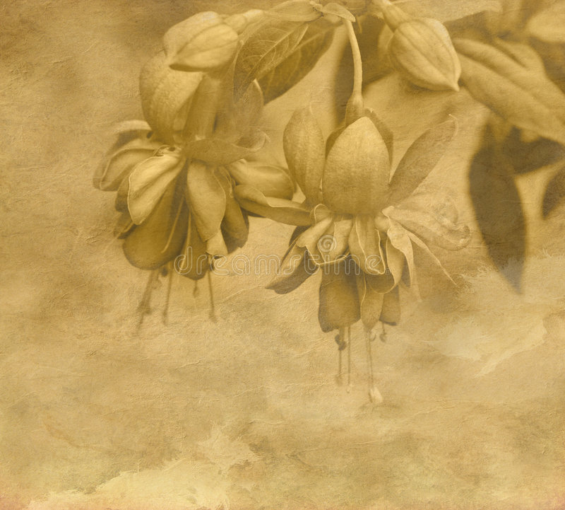 Flor do vintage ilustração stock