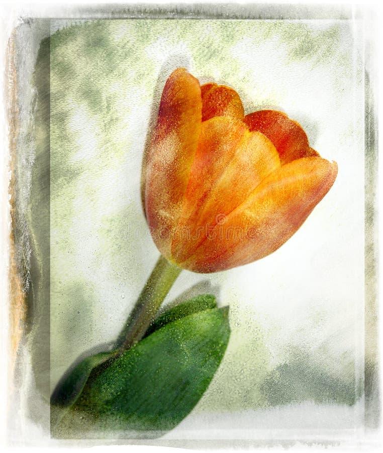 Flor do vintage ilustração royalty free