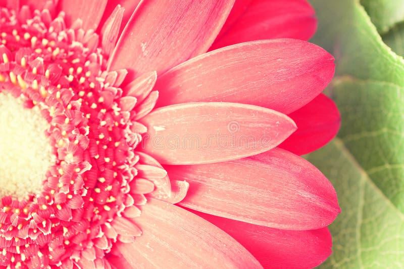 Flor do vintage (macro) imagens de stock