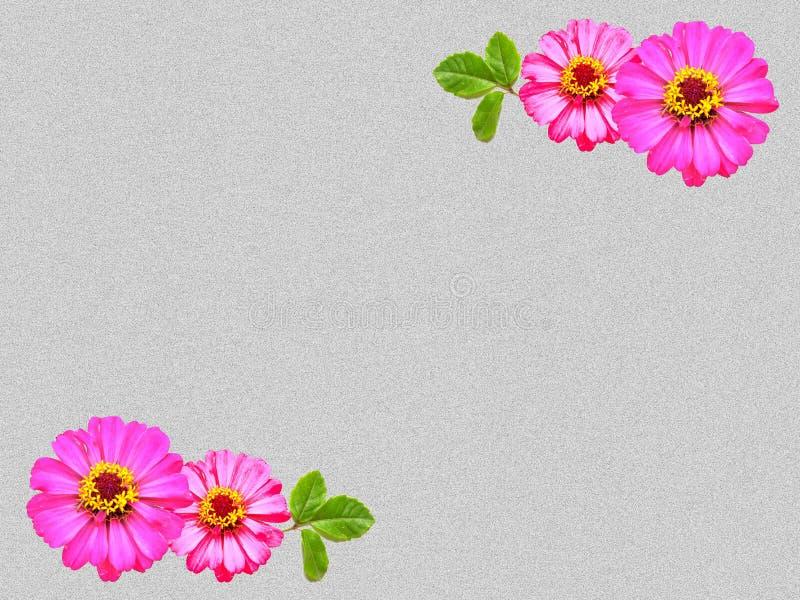 Flor do Zinnia no fundo do grunge fotografia de stock