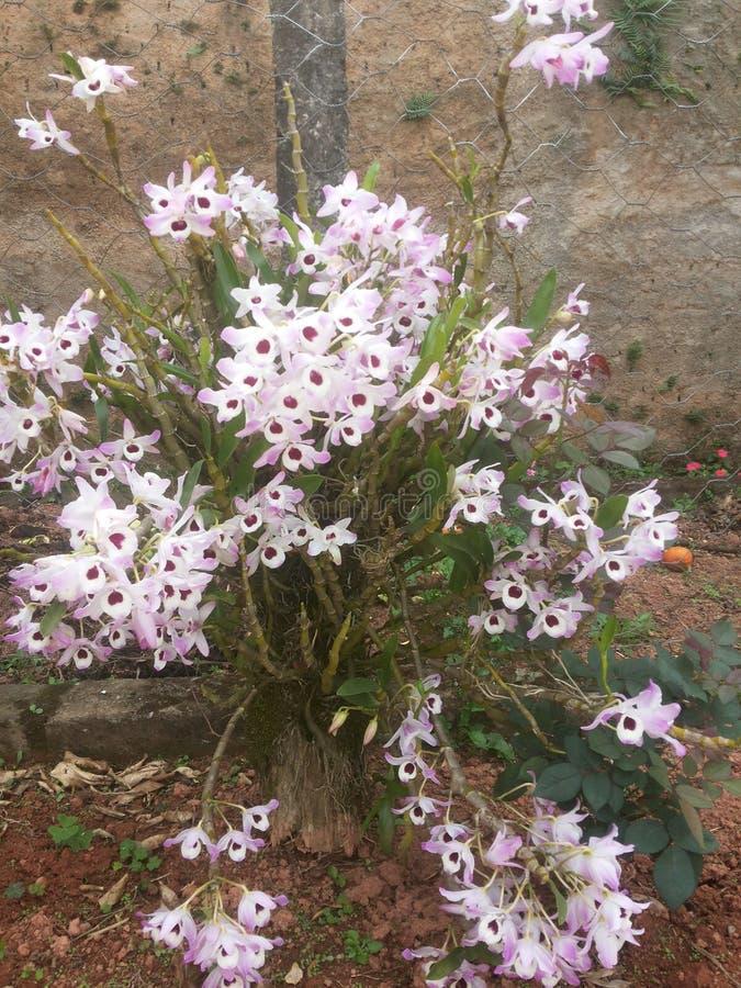 Flor doet meu jardim royalty-vrije stock foto