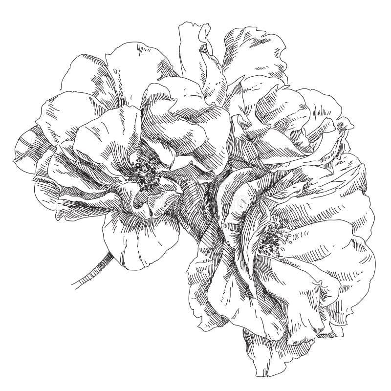 Flor drenada mano stock de ilustración