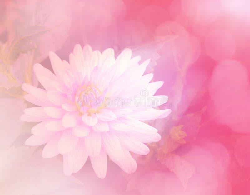 Flor dulce del color en fondo suave del estilo fotos de archivo libres de regalías