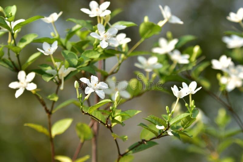 Flor e árvore pequenas brancas imagens de stock royalty free