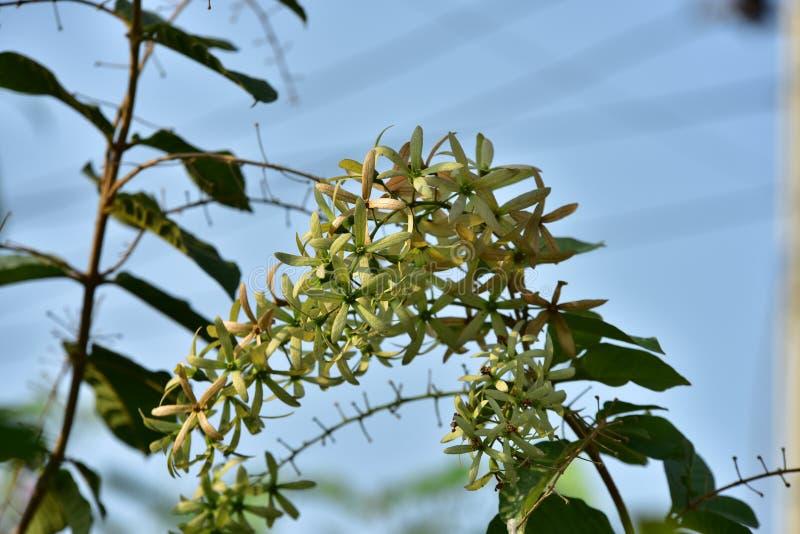Flor e árvore pequenas verdes no por do sol foto de stock