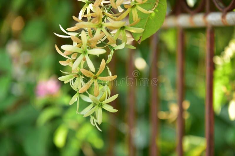 Flor e árvore pequenas verdes no por do sol fotografia de stock royalty free