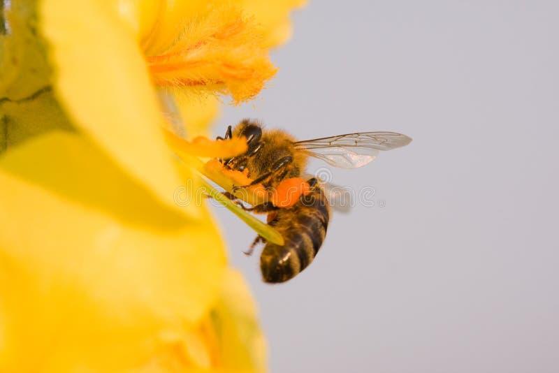 A flor e a abelha fotos de stock