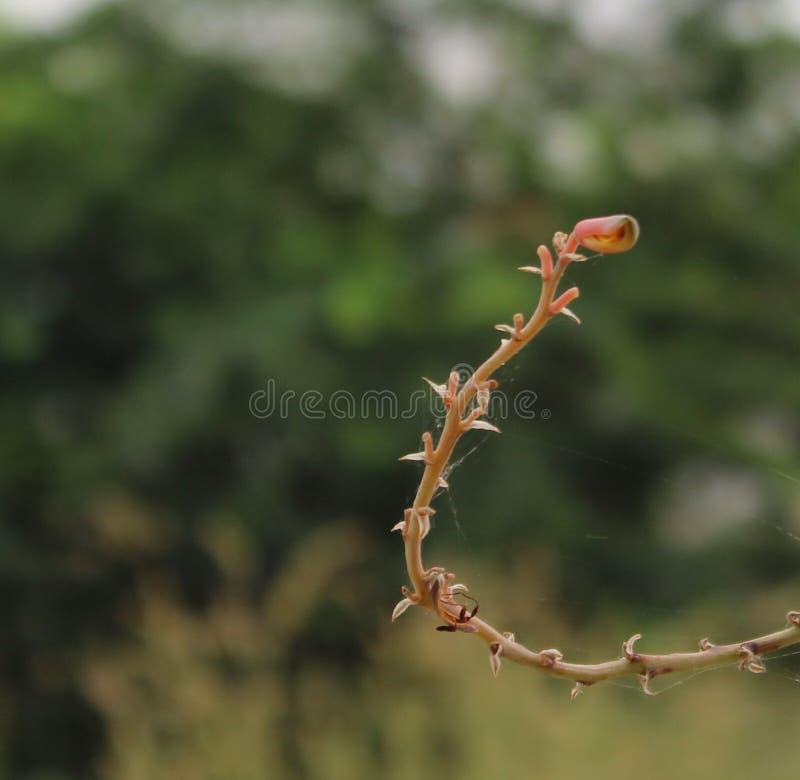 Flor e aranha imagens de stock