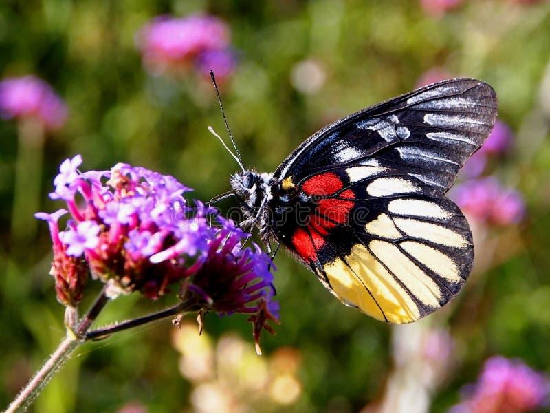 Flor e borboleta fotografia de stock royalty free