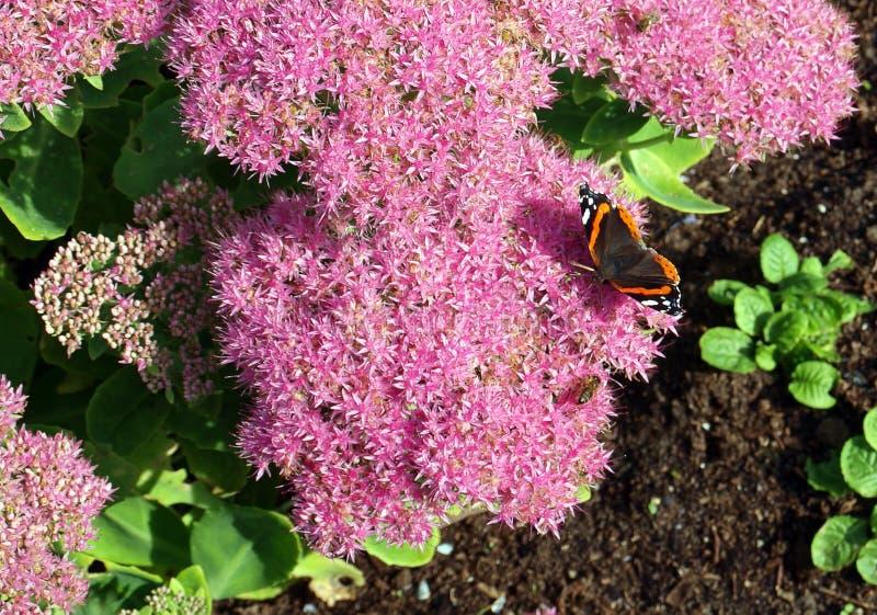 Flor e borboleta foto de stock