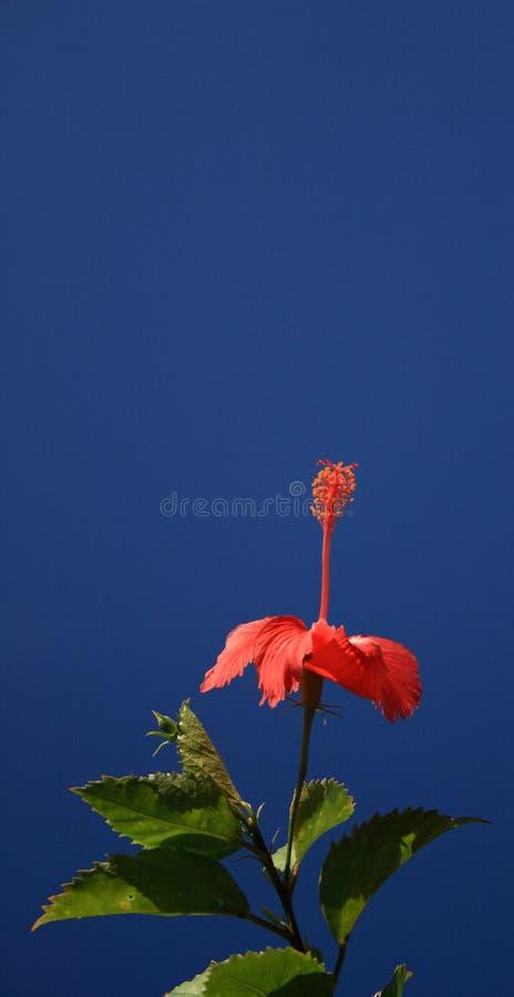 Flor e céu vermelhos imagem de stock royalty free