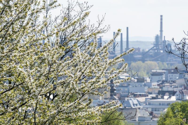 Flor e cidade da árvore de cereja fotos de stock royalty free