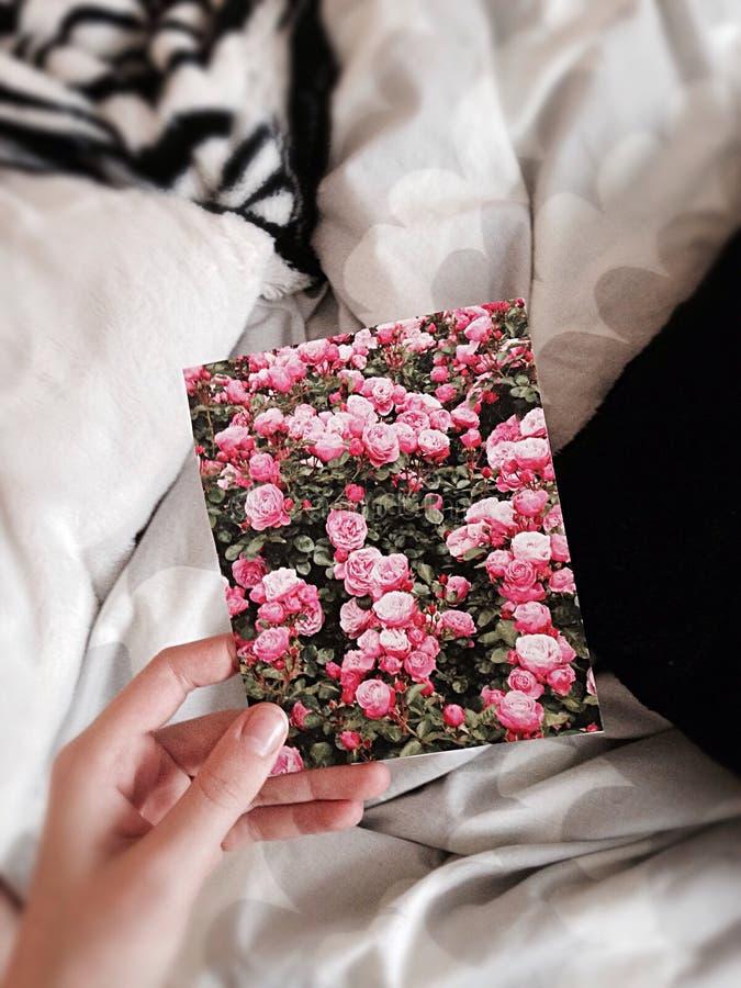 Flor e Cousy fotografia de stock