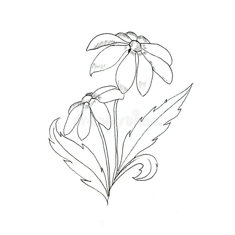 Flor e folhas da margarida ilustração royalty free