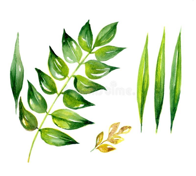 Flor e folhas da margarida ilustração do vetor